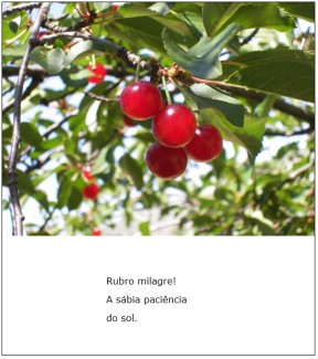 Rubromilagre